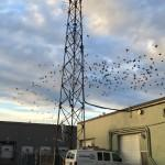 The Birds Love Our Antenna!